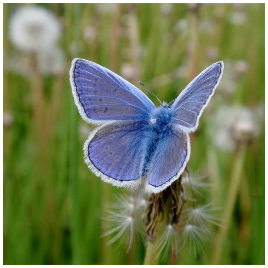 Like a butterfly ...... by MC-blue
