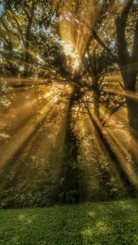 Sunrise thru the foggy forest  (portrait)