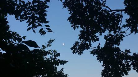 Moon in the oaks