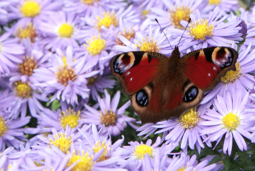 Butterfly by kzida