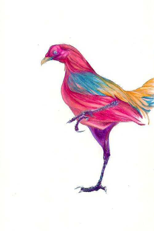 Pollo by Goddess-of-Time