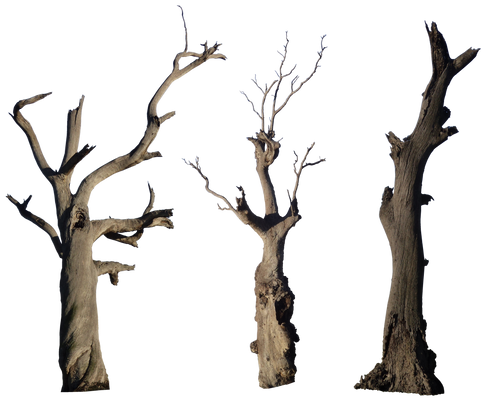 Dead Tree Pack 001 - HB593200