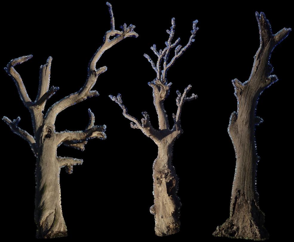 Dead Tree Pack 001 - HB593200 by hb593200 on DeviantArt