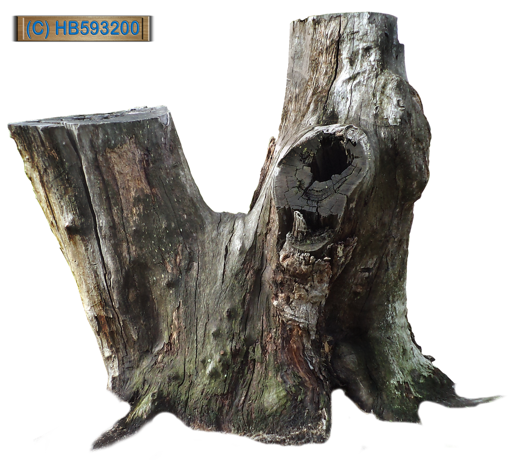 Tree Stump 002 - HB593200 by hb593200 on DeviantArt