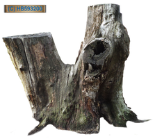 Tree Stump 002 - HB593200 by hb593200