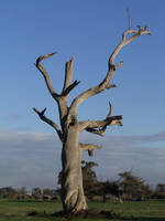 Dead Tree 001 - HB593200 by hb593200