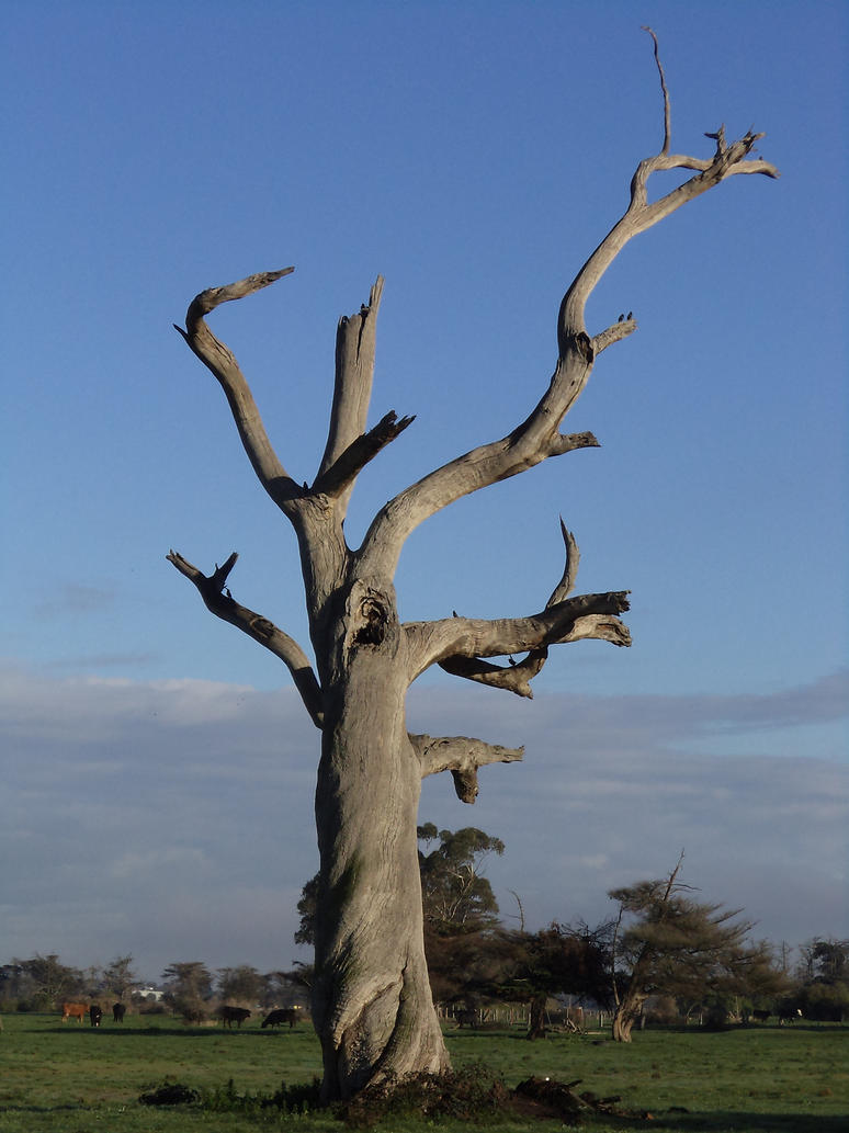1000+ Images About DEAD Tree..... On Pinterest