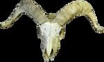 Skull 002 - HB593200
