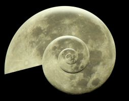 Moon Snail 004 - HB593200 by hb593200