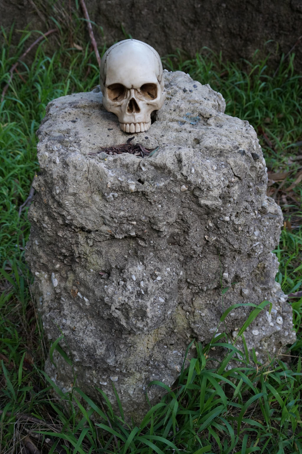 Human Skull 009 - HB593200 by hb593200