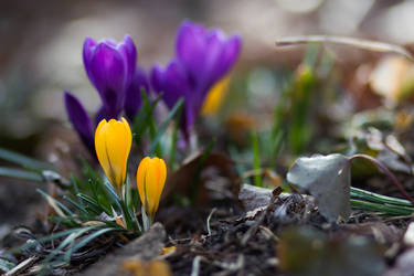 A new spring under our feet