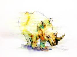 Sumatran rhino by young920