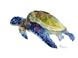 green sea turtle by young920