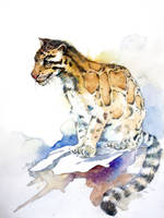 clouded leopard by young920