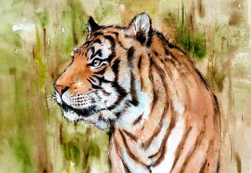 Malayan Tiger 2