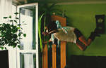 Please, open the door so I could fly away