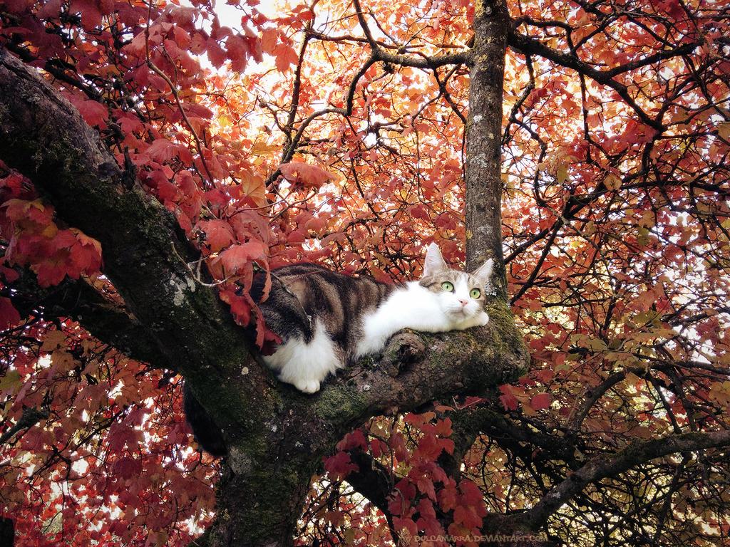Autumn Kitteh by Dulcamarra