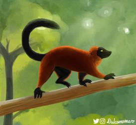 Red ruffed lemur study by Dulcamarra