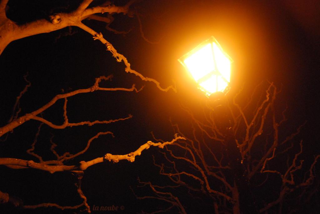 Quand la Noube a un appareil photo entre les mains Les_arbres_ne_dorment_jamais____by_lanoube-d5t74de