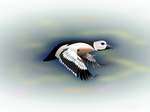Steller's Duck