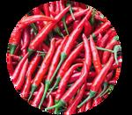 Cayenne Chilli Pepper by kittengeist