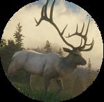 Rocky Mountain Elk by kittengeist