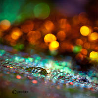 Bokeh Bomb by jannickefish