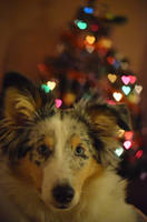 Christmas hearts by darthsabe