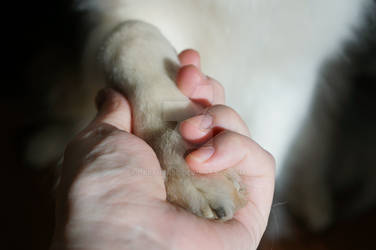 Dog in a hand