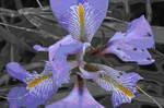 Soft plastic Iris