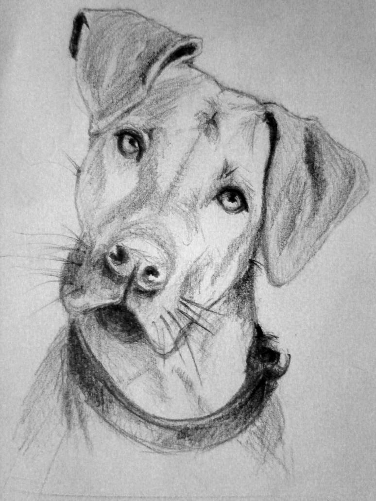 Dog Sketch | Www.imgkid.com - The Image Kid Has It!
