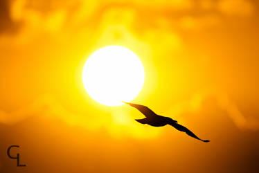 Sunrise flight by Goro38