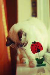 Me and the ladybug 1