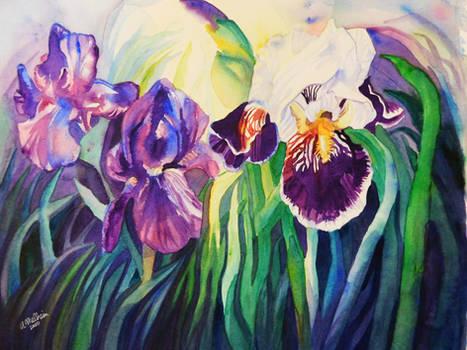 Trio of Irises