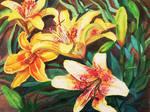 Yellow Lillies by Amaryn-Philomena
