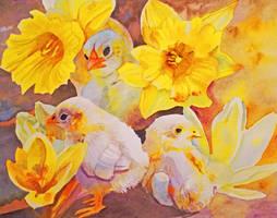 Yellow - Chicks, Crocuses, and Daffodils