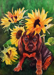Puppy and Sunflowers