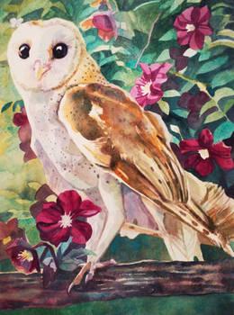 Owl and Lenten Roses