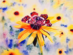 Butterfly on Black-Eyed Susan by Amaryn-Philomena