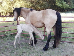 new colt