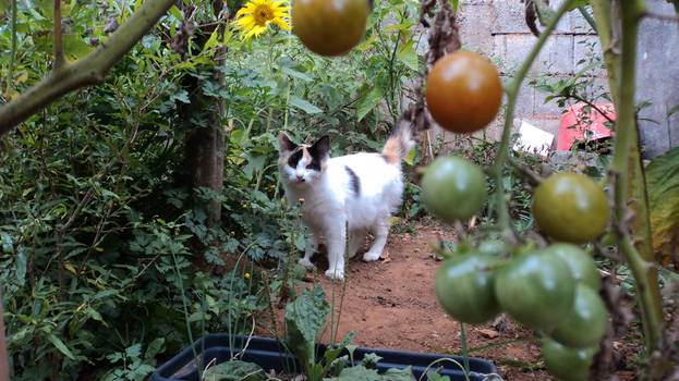 Cat at my backyard