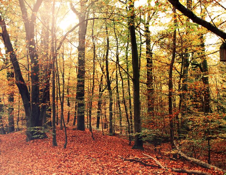 Autumn II by vanerich