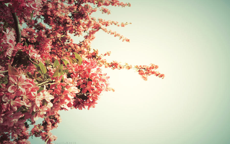 springtime wallpaper by vanerich