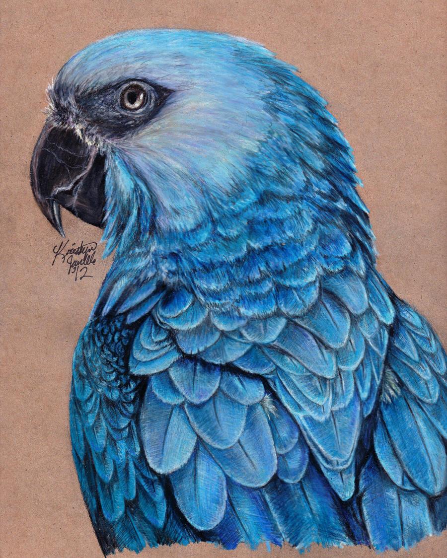 Spix's Macaw by KristynJanelle