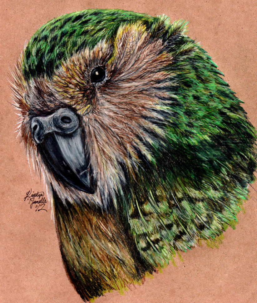 Kakapo by KristynJanelle on DeviantArt