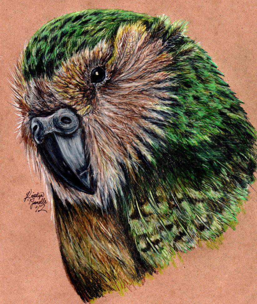 Kakapo by KristynJanelle on DeviantArt