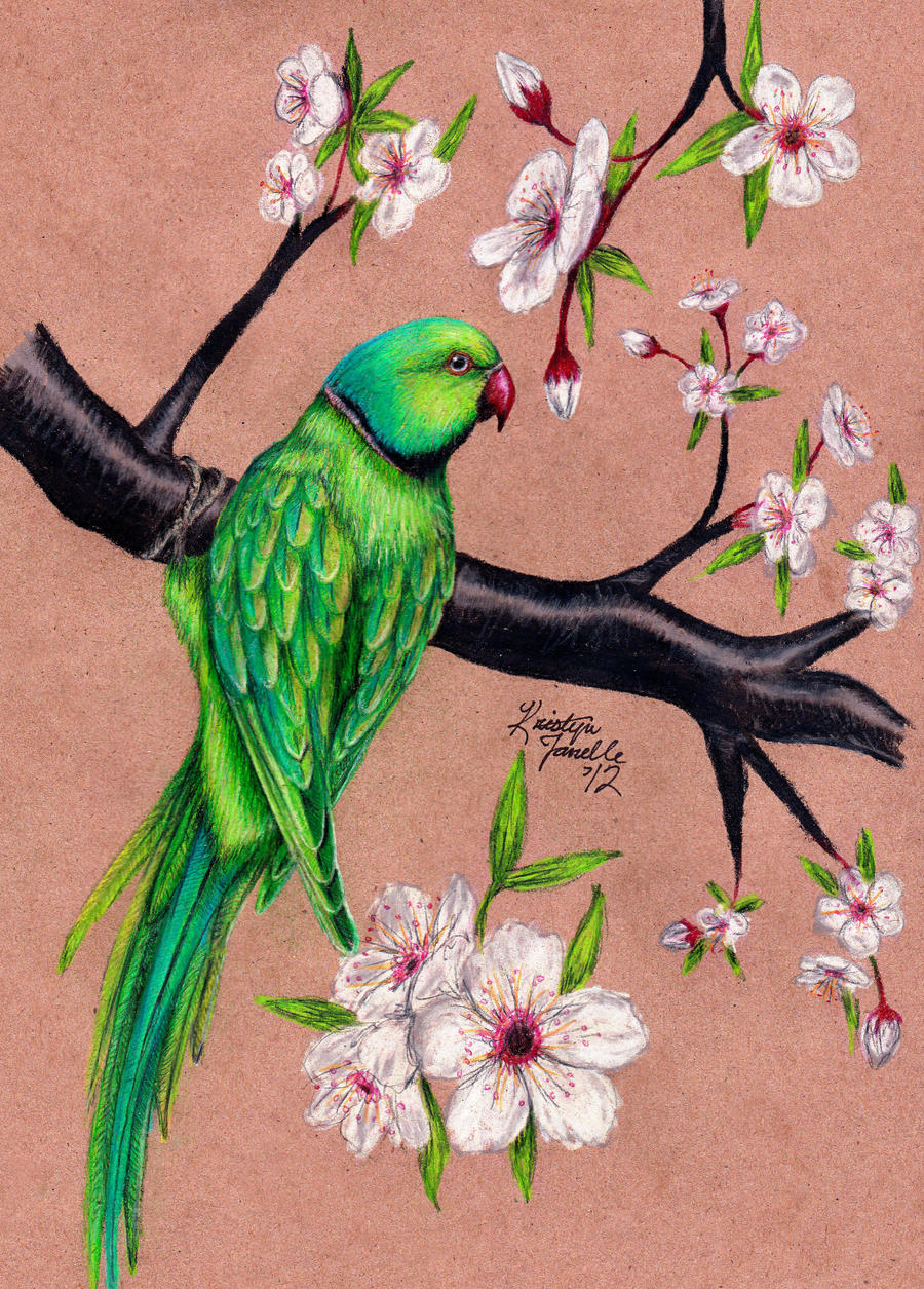 Drawings Of Birds And Flowers 71567 Loadtve