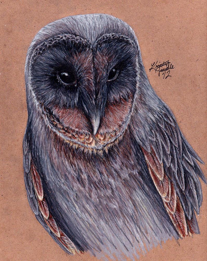Black Barn Owl by KristynJanelle