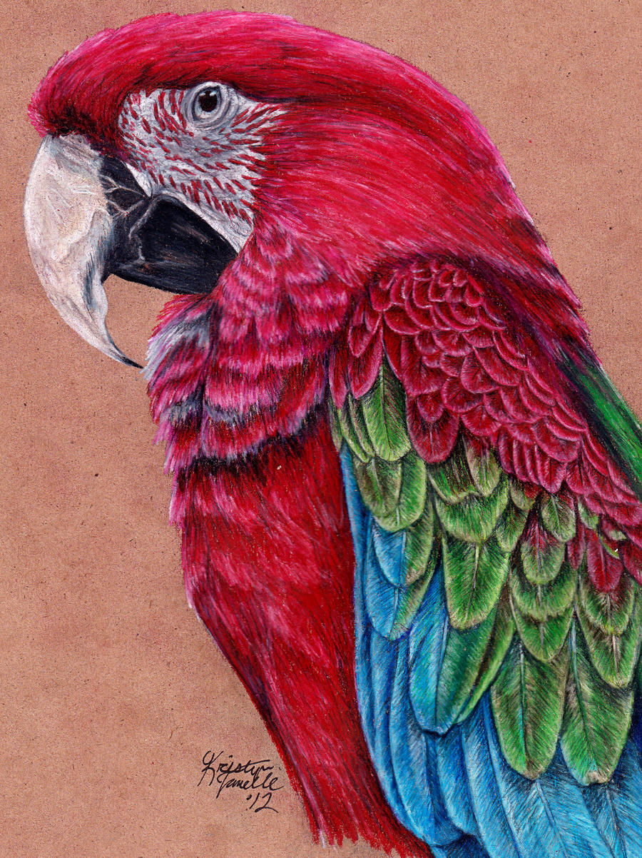 Commission - Green-Winged Macaw by KristynJanelle