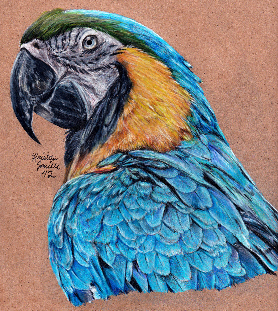 Blue and Gold Macaw - Redrawn AGAIN by KristynJanelle